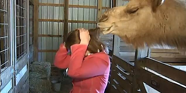 YouTube - NBC12 Reporter attacked by a camel