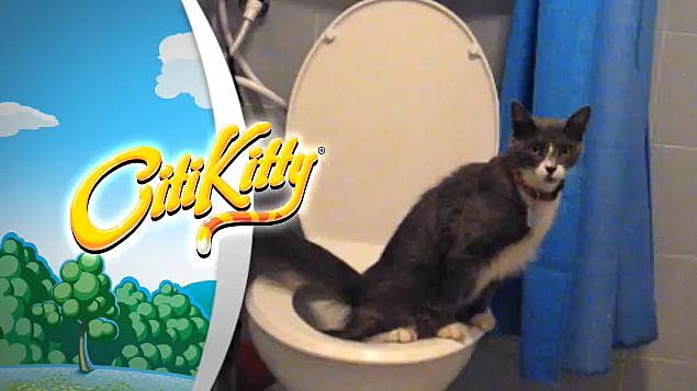 CitiKitty Cat Toilet Training Kit‬‏ - YouTube
