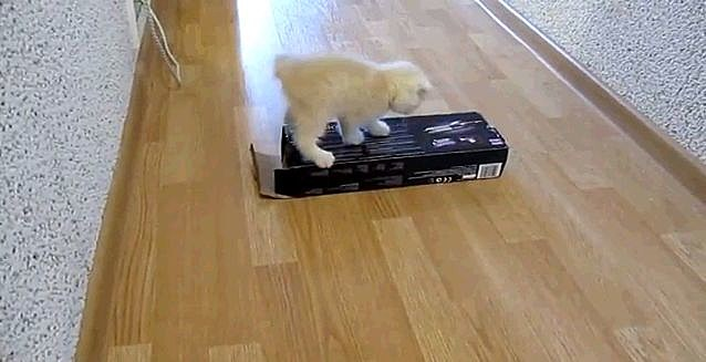 Kitten and a box