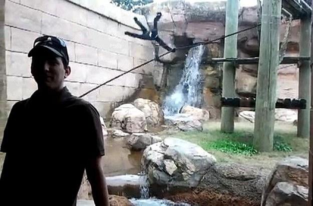 Jealous Monkey