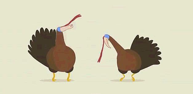 Turkey Dubstep