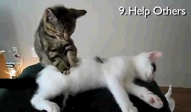 Cats Act Out New Years Resolutions